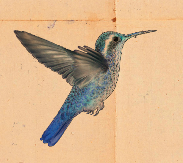 silverbird.jpg